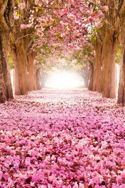 Nějakou krásnou jarní tapetu .. Díky | ask.fm/noemipictures