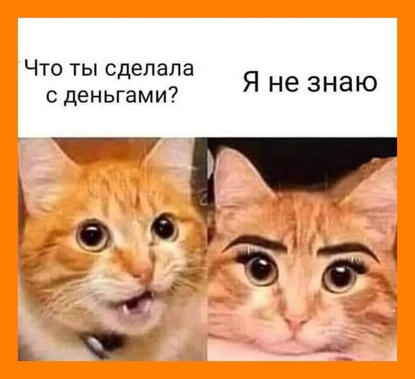 Cat Carnivore Felidae Font