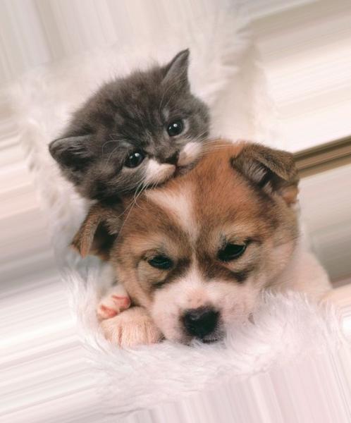 Кто тебе больше нравится щенки или котята