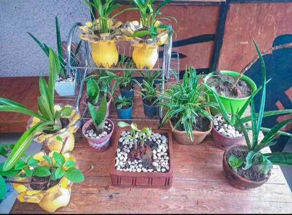 Are you a plantitoplantita Share a photo of your favorite plant story about how