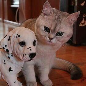 У тебя есть домашние животные с
