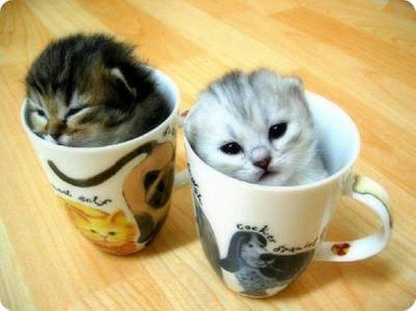 Qué es más adorable Un gatito o un perrito