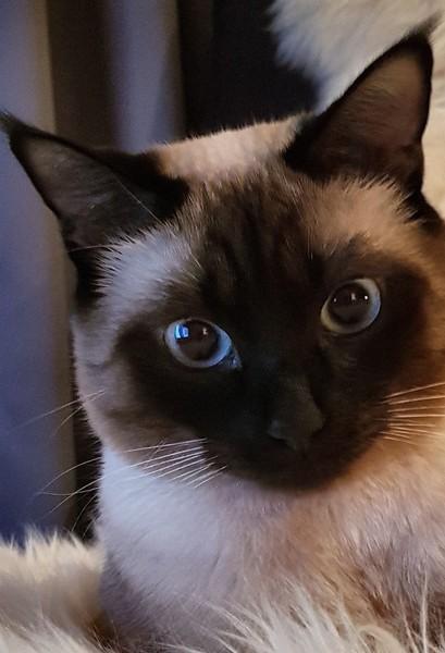 Кошки или собаки Выложи фото своей любимой породы