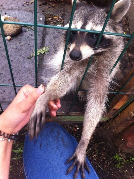 Любишь ходить в зоопарк Каких животных хочешь увидеть еще