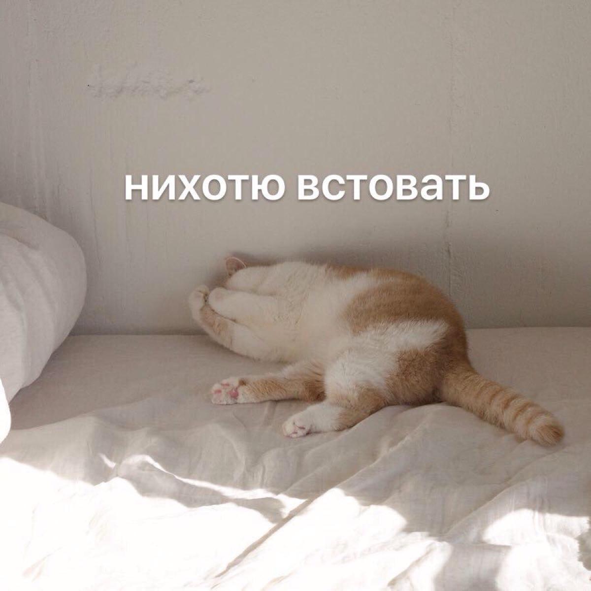 утренний мем