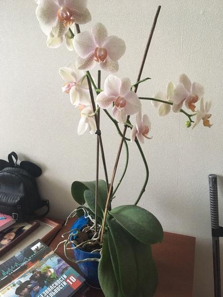 Какие домашние цветы есть у тебя если можешь скинь фото