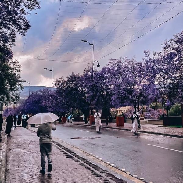 مدينة الجمال
