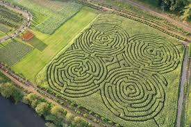 Ever been to a corn maze If youve never heard of them you should look them up