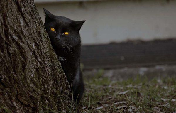 Правда что кошки  это проводники