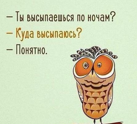 Bird Mammal Font Owl