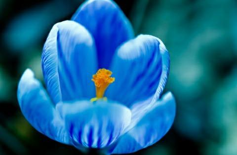 Лайкнувшим цветтебе синий