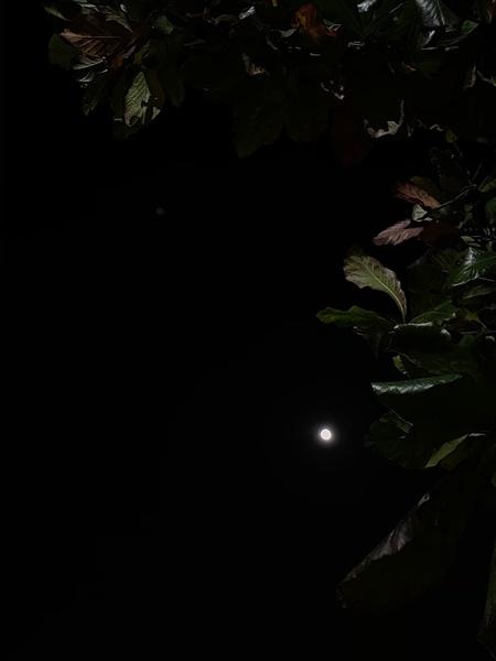 مثل القمر ف عتمة الليل  ظاهر وغيرك يغيب ف طلة الصبح مابان