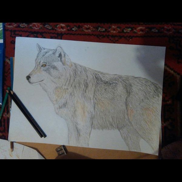 134  Piękne rysunki