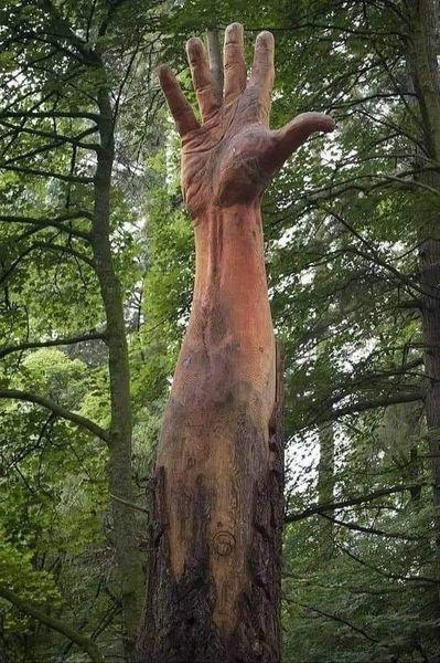 شجرة ويلز