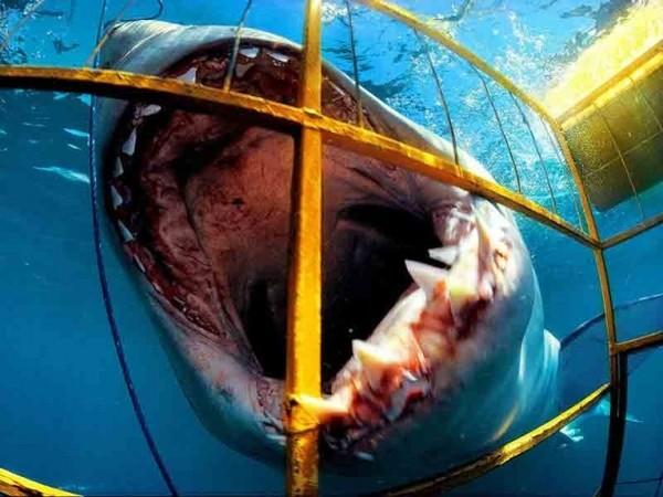 Тебе хотелось бы совершить погружение в клетке к акулам
