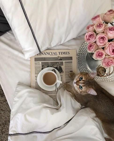 Не хотите ли чаю