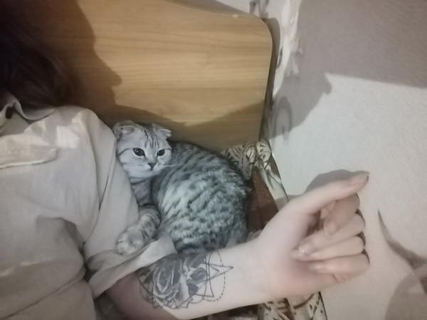 Любишь кошек