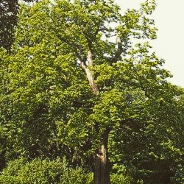 Wszystkiego najlepszego w Dniu Drzewa Wstaw fotkę swojego ulubionego drzewa