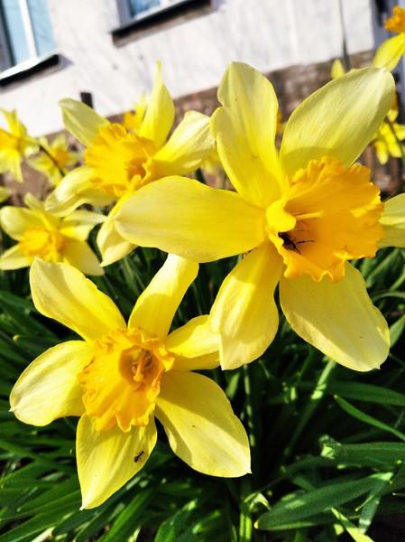 Привет  как дела Как вам весна  Прикрепи красивую фотку