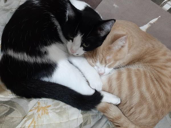 Котят любишь