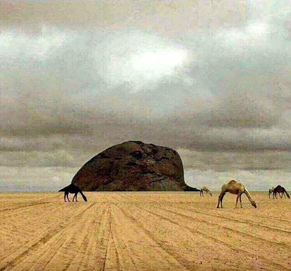 تجتمع بهذه الصورة عدة آيات تدعو للتفكر بعظمة ﷲأفلا ينظرون إلى الإبل كيف خلقت