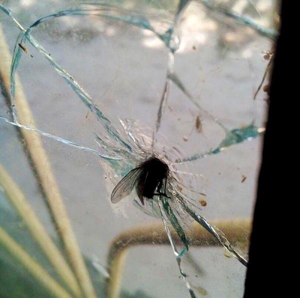 мысль в 210 Вопрос мучает с детства Как мухи попадают в пространство между двух