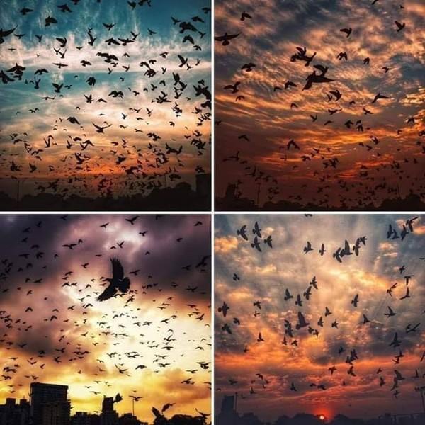 ليتنا كالطيور كلما ضاقت بنا الأرض حلقنا نحو السماء دون إن تلاحقنا