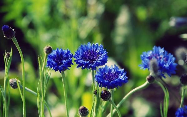 Jaki kwiat jest twoim ulubionym