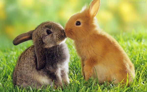 Espaço livre para coelhos