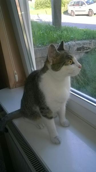 zdjęcie kici czyli chodzi o kotkę Malinę  P D