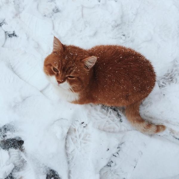 Говорят рыжие коты приносят деньги Где мой мешок с баблом
