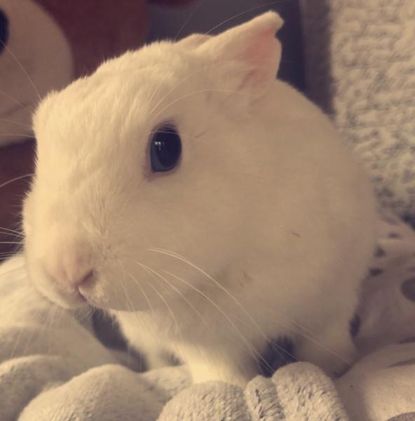 Prawie szczurek