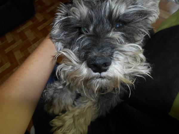 Foto de su mascota