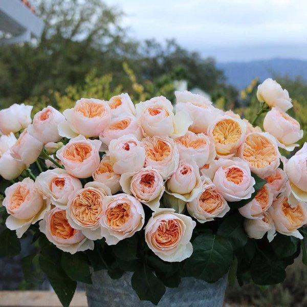 Как намекнуть парню что я хочу от него цветы