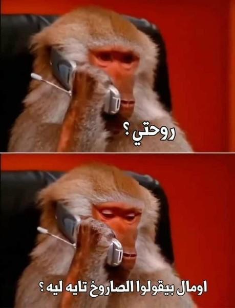 القرد ده عسل