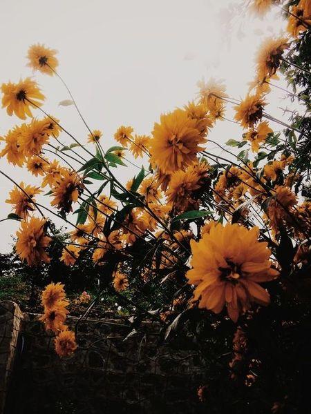 o matko dostałam bzika na punkcie żółtych kwiatków  są takie śliczne