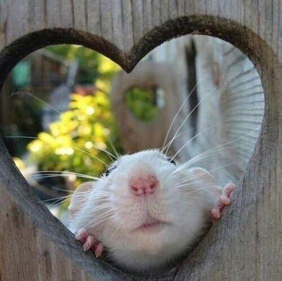 Eye Window Rodent Carnivore