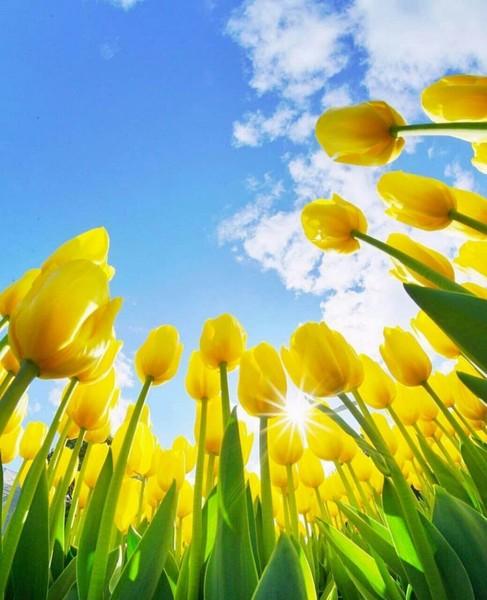 كم سيكون جميلا أن تحيا سعيدا بما تمتلك أن ترى جوانبك المشرقة أن تفتخر