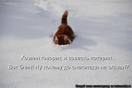 Dog Snow Dog breed Carnivore