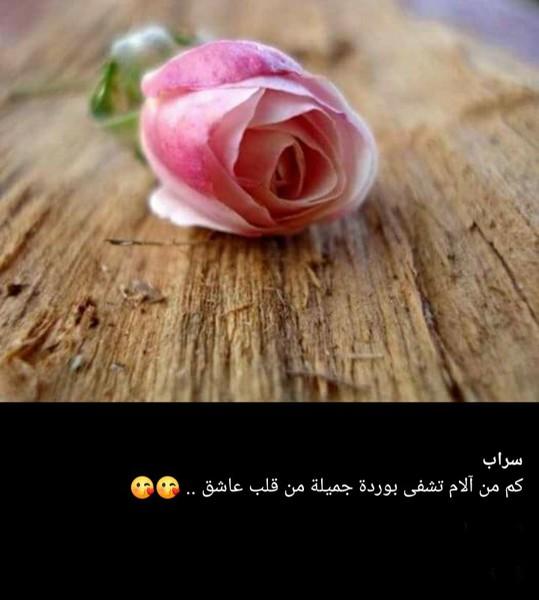 الورد يعبر عن الحب بصمت بلغة لا يعرفها سوي القلب