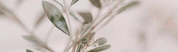 Plant Petal Terrestrial plant Twig