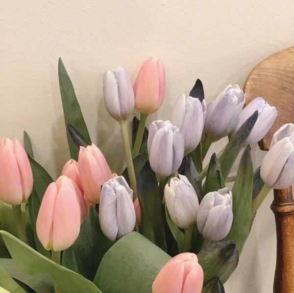S 8 marta samie krasivie kukolki