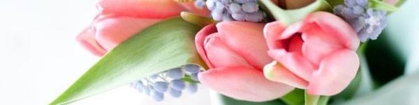 Flower Plant Petal Botany