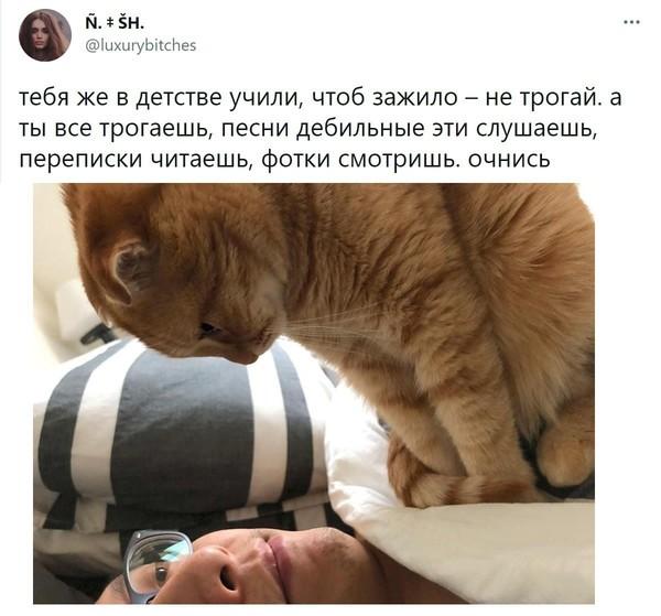 Product Comfort Cat Gesture