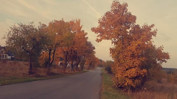 Lubisz jesień  I spacery o tej porze  Dlaczego