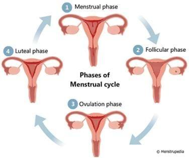 الام الظهر خلال فترة الدورة الشهرية WHY DO WOMEN HAVE BACK OR PELVIC PAIN DURING