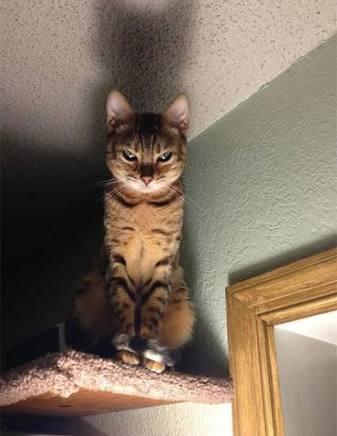 إنه يوم القطط العالمي ضع صورة GIF مضحكة لقط