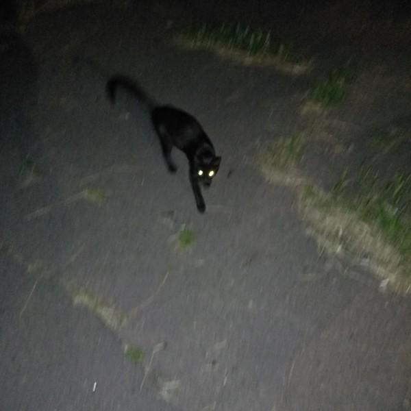 А вы верите в то что черная кошка перебегает дорогу к беде