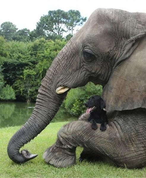 Слон размером с щенка или щенок размером со слона