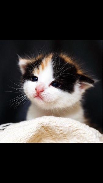 Если бы у тебя была возможность завести абсолютно любое домашнее животное кого